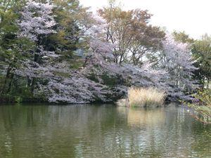 Kikuna201104102
