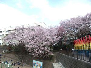 Kohoku20110410