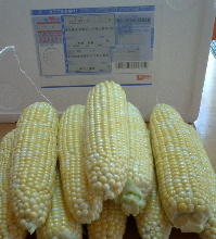 petercorn01.jpg
