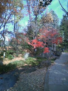 Koenji蚕糸の森公園